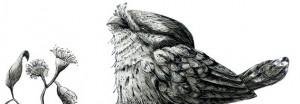 renee treml owl